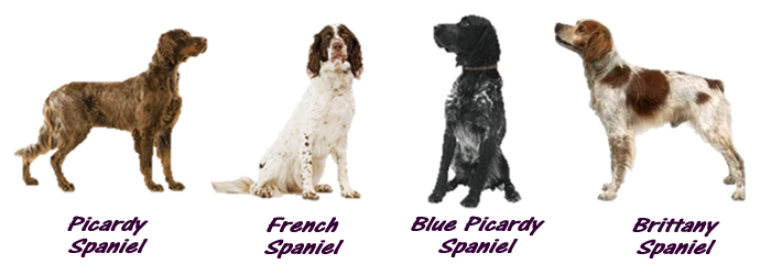 french spaniels